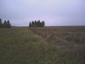 A fence along the edge of a field