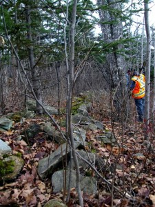 Rock line along the edge of a former field. Sections of cedar rail fence were also found on top of this rock line